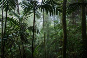 en regnskog