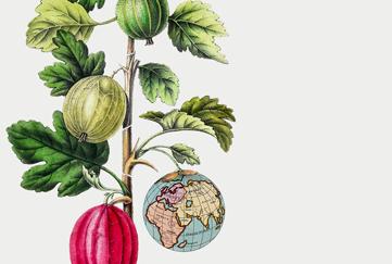 Hållbarhetsberäkna dina måltider